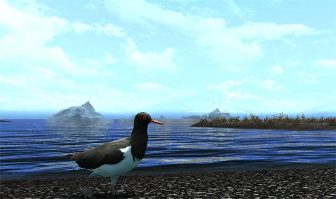 Birds of Skyrim