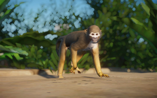 Ecuadorian Squirrel Monkey